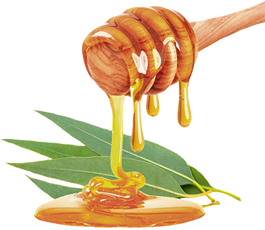 HONEY- y EUCALYPTUS_1